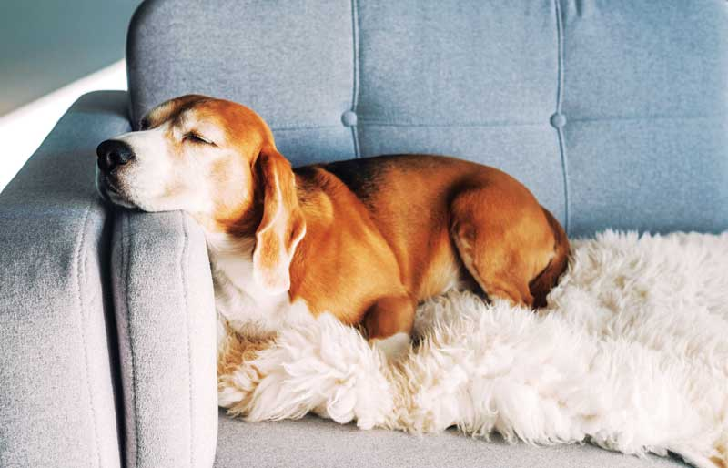 When treatment options are exhausted or become cost- and/or time-prohibitive, unmanageable chronic pain can lead to humane euthanasia of a beloved pet.