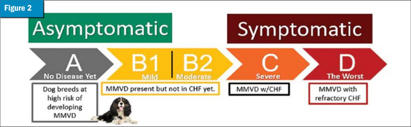 ACVIM classification of MMVD in dogs.