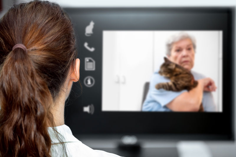 Developed by the American Veterinary Medical Association and the American Animal Hospital Association, the 2021 AAHA/AVMA Telehealth Guidelines for Small-Animal Practice serves as a step-by-step roadmap for effectively and efficiently incorporating telehealth into veterinary practices. Photo ©BigStockPhoto.com
