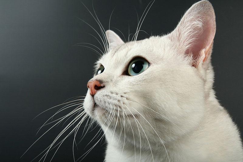 Winn Feline Foundation will henceforth be known as EveryCat Health Foundation. Photo ©BigStockPhoto.com