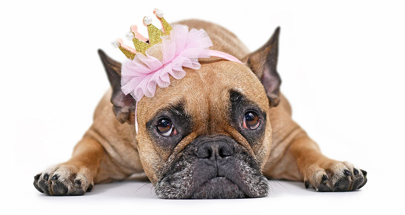 'Princess' has been identified as the most popular pet name of all time, according to FirstVet. Photo ©BigStockPhoto.com