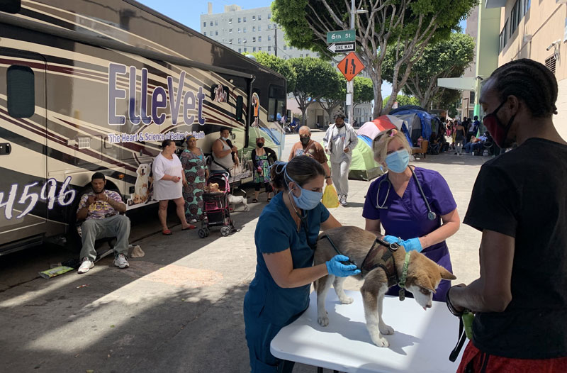 Homeless and street pets in America's most vulnerable communities will soon have increased access to care, food, and supplies, thanks to ElleVet Sciences. Photo courtesy ElleVet Sciences