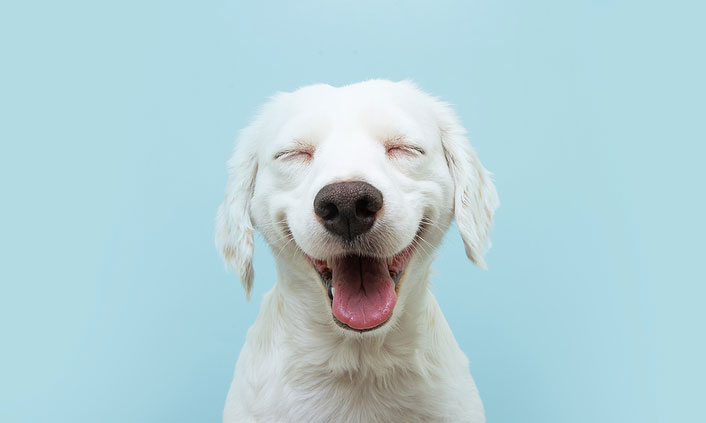 The American Kennel Club (AKC) Canine Health Foundation (CHF) has received a donation totaling $108,872 from Purina.Photo ©BigStockPhoto.com