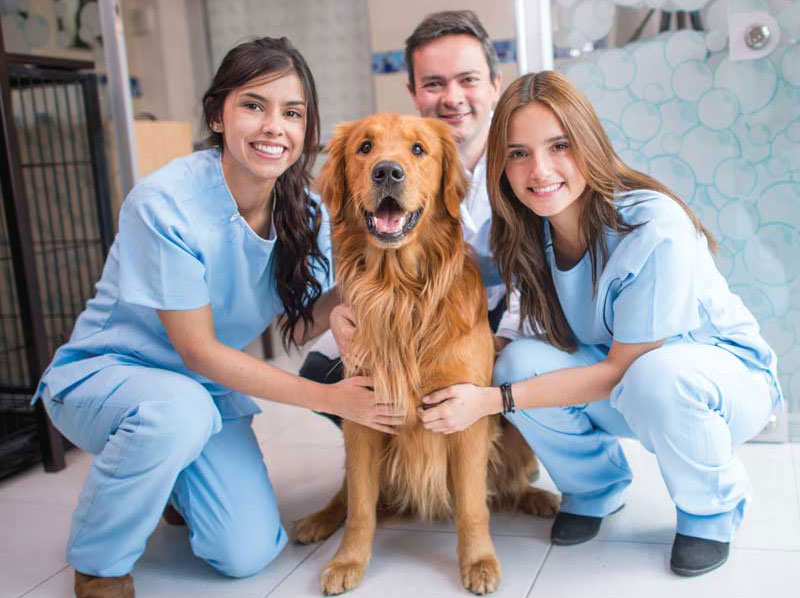 naming the trends impacting veterinary teams can be a powerful exercise.