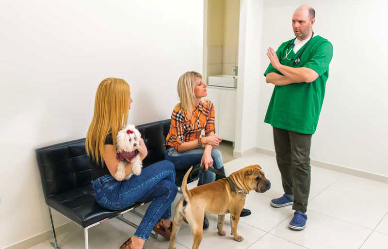 Helping clients navigate pet insurance can help them pick what is best for their companions. Getting to know patients well also helps guide you when discussing options.