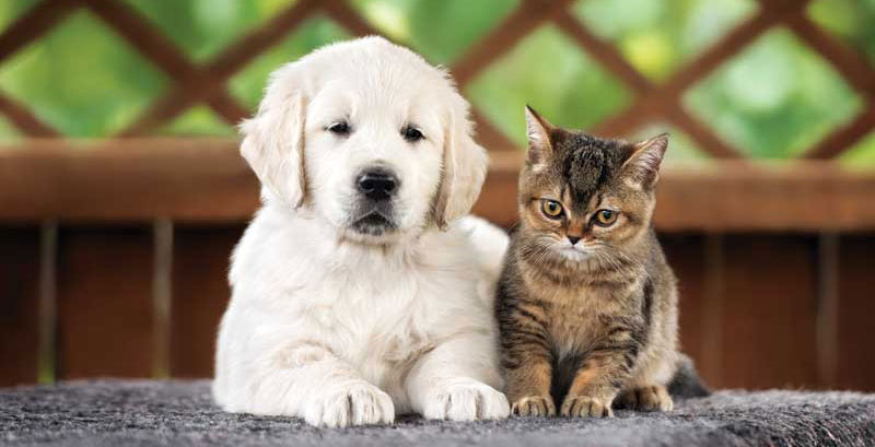 When to use antioxidants and when not to isn't clear cut. In puppies and kittens, for example, antioxidants may affect vaccine response and immunity. Photo ©BigStockPhoto.com