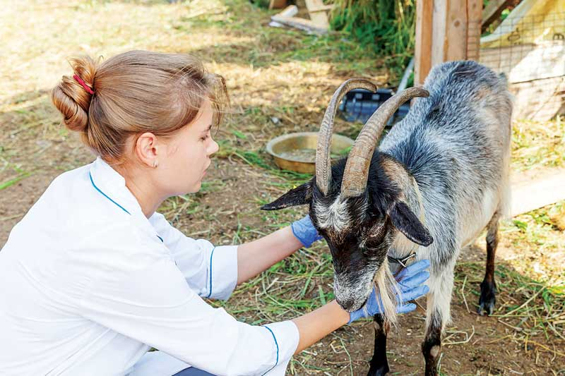 The way a veterinary team treats and diagnoses farm animals differs significantly from how they work with house pets.
