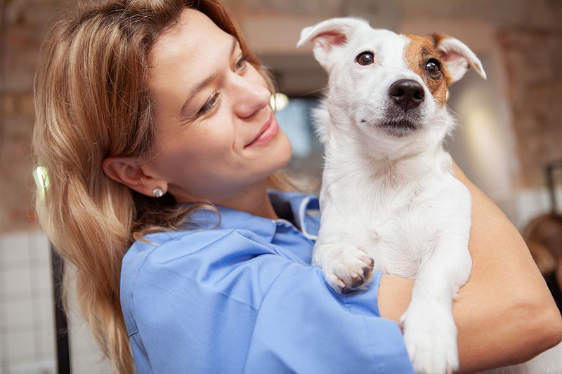 AVMF has launched a new program to help low-income families afford care for sick or injured pets by providing reimbursement to member practices that provide services at discounted rates or free of charge. Photo ©BigStockPhoto.com