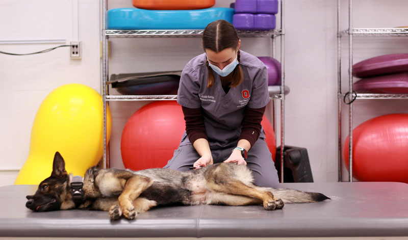 Morris Animal Foundation-funded researchers at The Ohio State University (OSU) have launched a pilot study to evaluate the use of extracorporeal shockwave therapy (ESWT) as an affordable way to treat lower back pain in dogs. Photo courtesy OSU/Morris Animal Foundation