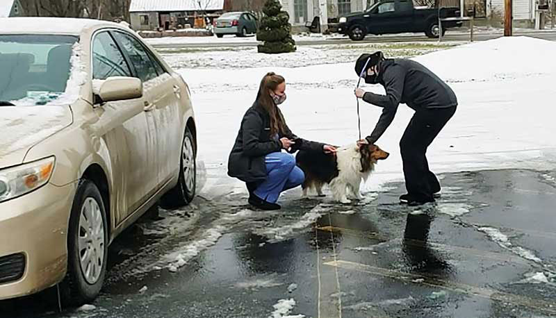 Doctors review online forms before appointments and prepare follow-up questions for patient handlers to ask clients when they retrieve pets from cars.