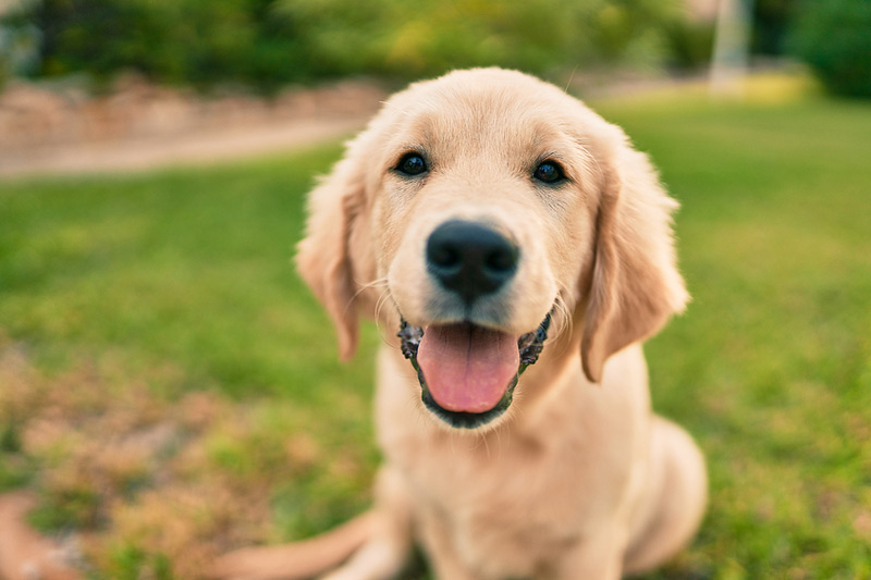 In honor of Pet Cancer Awareness Month (May), the American Kennel Club Canine Health Foundation is awarding more than $850,000 in grants to 11 projects, each with a focus on canine oncology. Photo ©BigStockPhoto.com