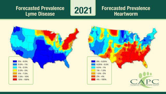 The Companion Animal Parasite Council (CAPC) has released its 2021 Parasite Forecast and corresponding 30-day Pet Parasite Forecast maps, alerting veterinarians and pet owners of impending outbreaks across the U.S. Photo courtesy CAPC