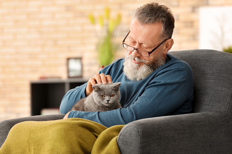 The American Association of Feline Practitioners (AAFP) has released a digital End of Life Educational Toolkit for veterinarians to help facilitate a peaceful and painless transition for a cat at the end of its life. Photo ©BigStockPhoto.com