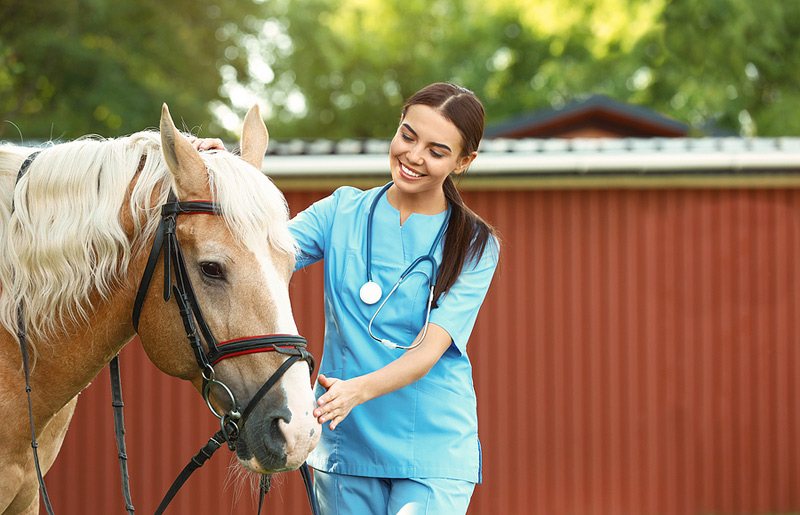 Fear Free has launched a new equine certification designed to improve the safety of horses and their veterinarians. Photo ©BigStockPhoto.com