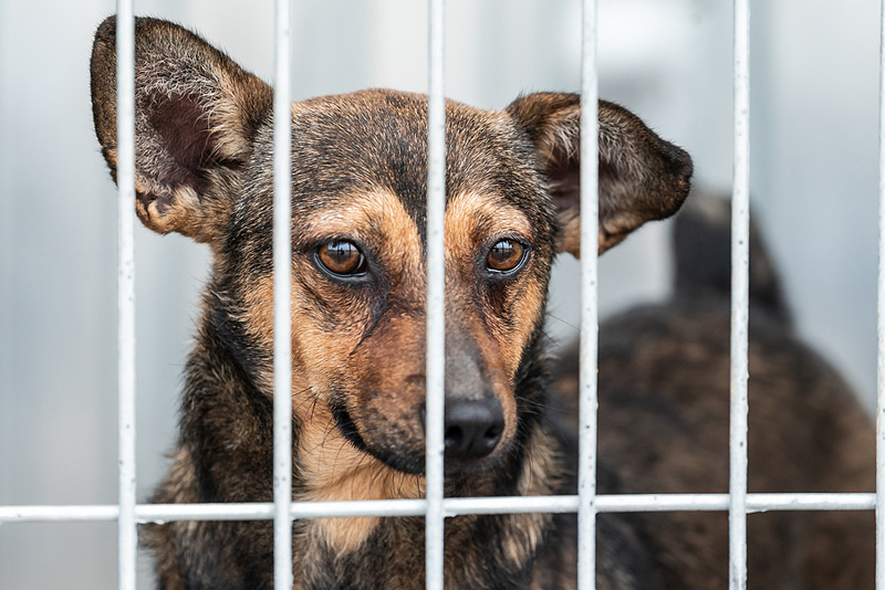 Due to a heightened risk of rabies, canine imports from 113 countries have been temporarily halted by the Centers for Disease Control and Prevention (CDC). Photo ©BigStockPhoto.com