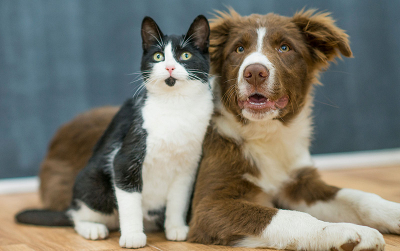 Enhancing the global standard of treatment for pets diagnosed with cancer is the goal of World Small Animal Veterinary Association's (WSAVA's) newest committee. Photo ©BigStockPhoto.com