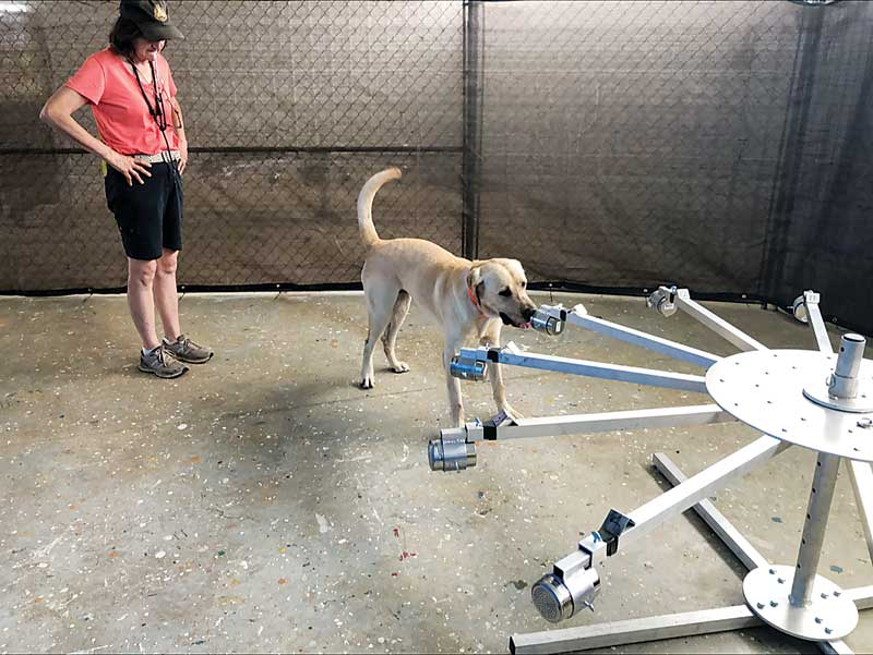 The training aid delivery devices (TADD) attached to each arm of the wheel allow the dog to safely detect the substance inside without being exposed to the substance. Photos courtesy United States Army