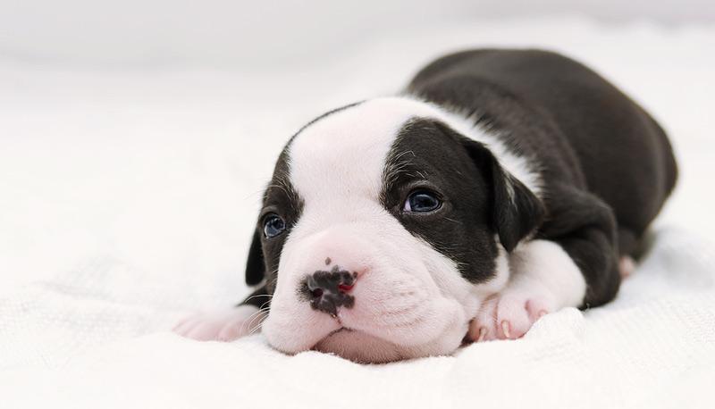 Boston-based company Embark Veterinary has raised $75 million in Series B funding. Photo ©BigStockPhoto.com