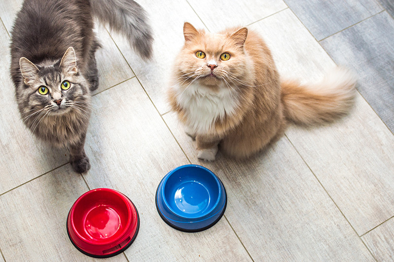 The Royal Veterinary College (RVC) says it has been notified of 528 cases of pancytopenia in cats in recent months, of which 63.5 percent (335 cases) were fatal. Photo ©BigStockPhoto.com