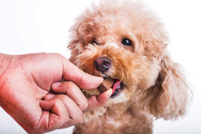 Heartworm preventive medications can be a regular profit center for the clinic. Photo ©BigStockPhoto.com