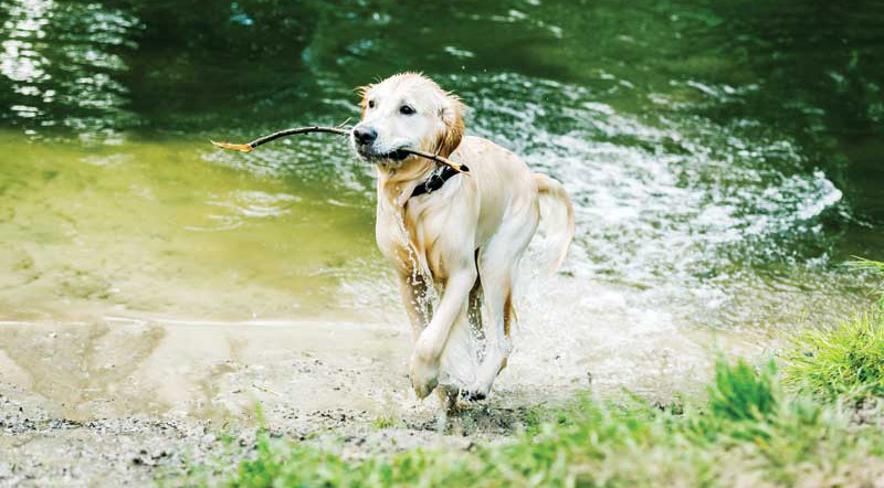 Remind clients to be extra diligent during the summer, when an increase in both mosquitoes and outdoor activities make dogs more susceptible to parasites. Photo ©BigStockPhoto.com
