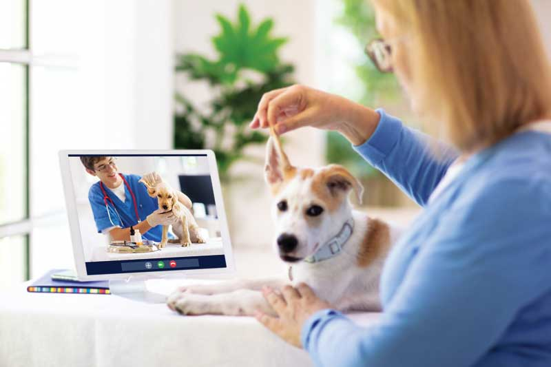 It is difficult to say what the future of veterinary medicine holds, but the past year proved incorporating telemedicine is pivotal  in what works for clinics, staff, and pet owners. PHOTOS COURTESY FAMVELD / ISTOCK / GETTY IMAGES PLUS