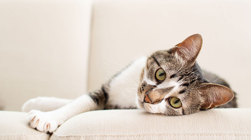 Cats befriended by children with autism spectrum disorder (ASD) get as much out of the relationship as their human companions. Photo ©BigStockPhoto.com
