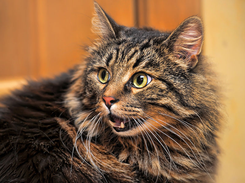 Mars Petcare Canada's voluntarily recall affects more than a dozen Whiskas products. Photo ©BigStockPhoto.com