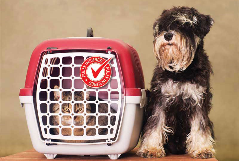 As pet adoptions have increased, so have pet insurance policy holders. Photo ©BigStockPhoto.com