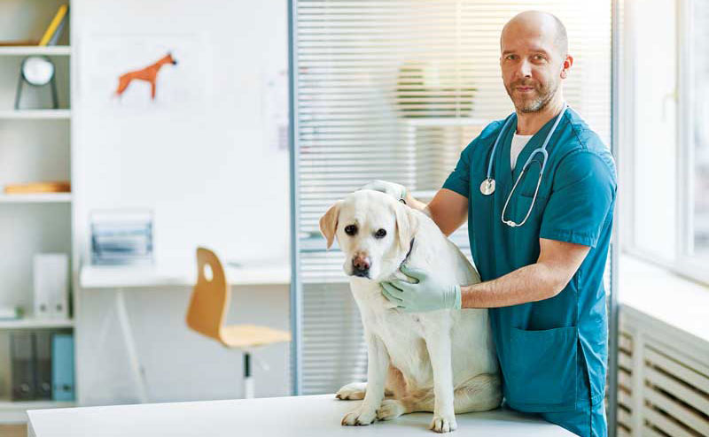 Veterinarians often struggle to find balance due to debt, work hours, families, and social lives. Photos ©BigStockPhoto.com