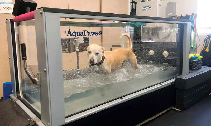 Hydrotherapy can help improve strength and balance without putting strain on joints. Photos courtesy Matthew Brunke