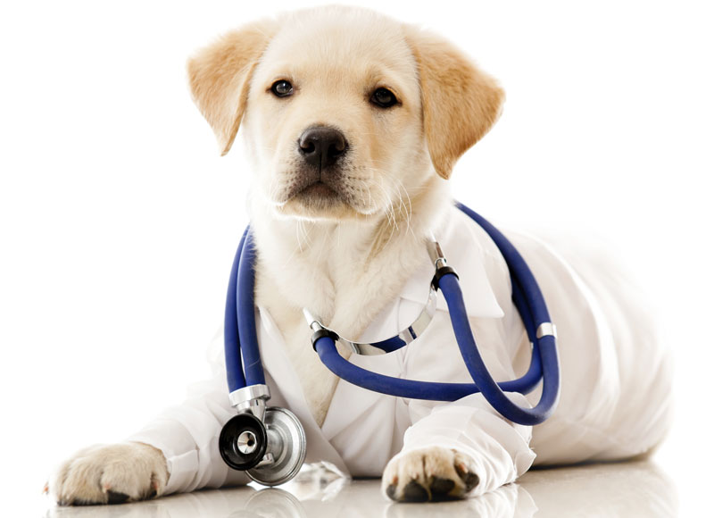 News About Dogs Getting Sick